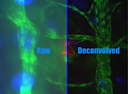 deconvolution10.jpg